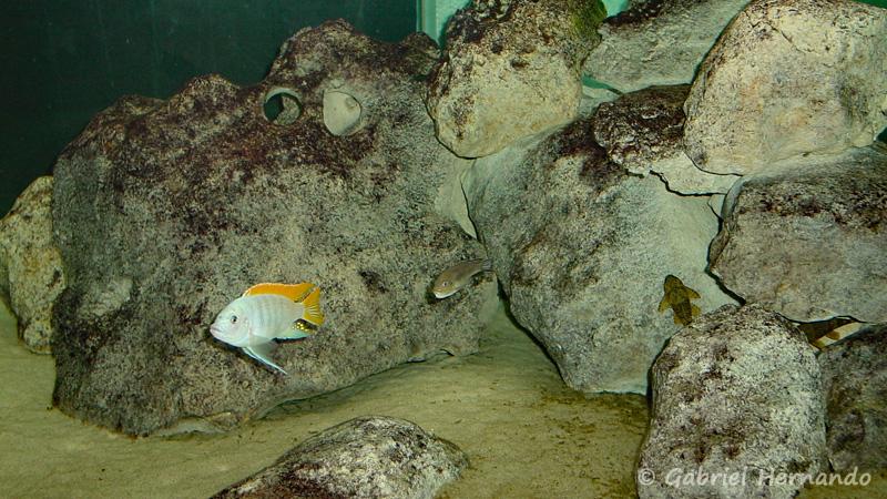 Amas de roches dans un aquarium (club aquariophile de Vernon)