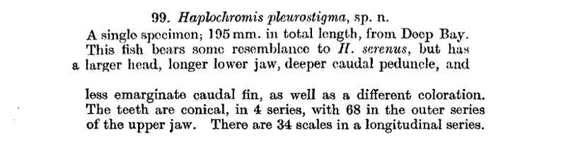 Copadichromis pleurostigma : Description de Haplochromis pleurostigma, Trewavase 1935
