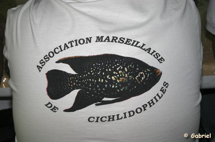 Association Marseillaise de Cichlidophiles
