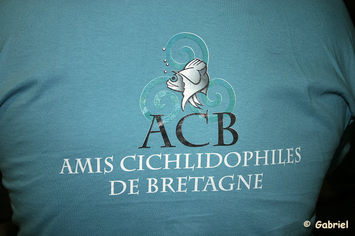 Amis Cichlidophiles de Bretagne