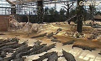 Les crocos passent le plus grand de leur temps à faire bronzette dans l'immense serre