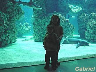 Un aquarium tropical, habituels chez les aquariophiles spécialisés en eau de mer