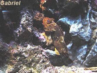 Un banc de poissons bleutés, on suppose des demoiselles ?