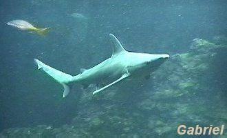 A coté des requins