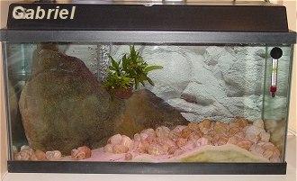 L'aquarium d'Anaïs