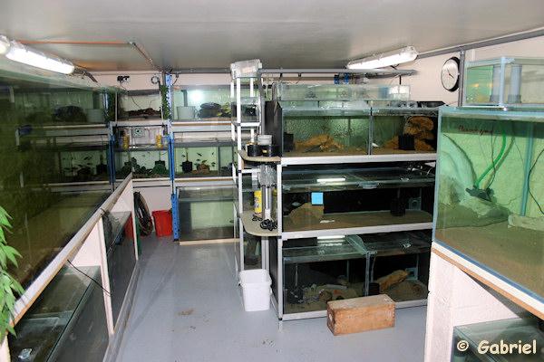 Fishroom de Gabriel le 04-11-2012