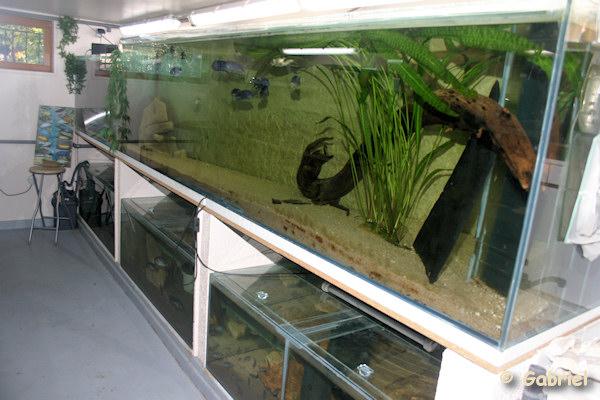 Fishroom de Gabriel le 04-11-2012 - Les aquariums du grand support maçonné
