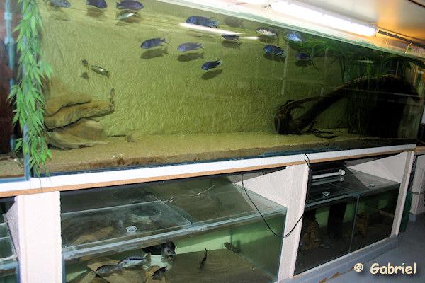 Fishroom de Gabriel le 04-11-2012 - Détails de l'aquarium de 1800 litres