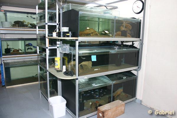 Fishroom de Gabriel le 04-11-2012 - L'ensemble d'aquariums présentant un volume de 1800 litres