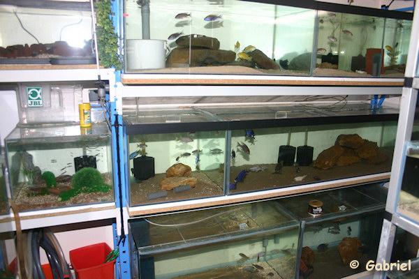 Fishroom de Gabriel le 04-11-2012 - L'ensemble d'aquariums présentant un volume de 1620 litres