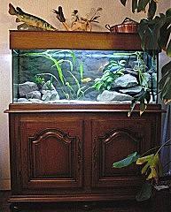 Mon ancien aquarium de 240 litre et son support