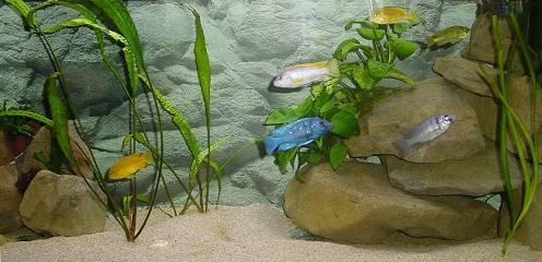 Aquarium de 240 litres