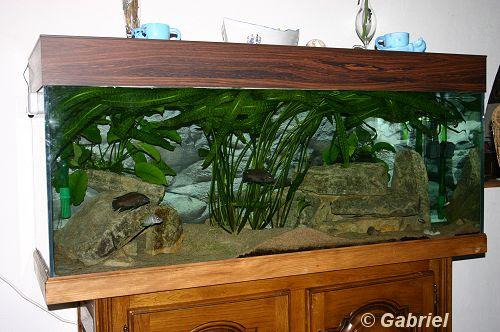 Aquarium de 450 litres dans le séjour