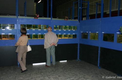 26 septembre 2009, Exposition vivipares de l'AFV à Pont l'Evêque