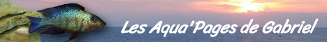 Les Aqua'Pages de Gabriel
