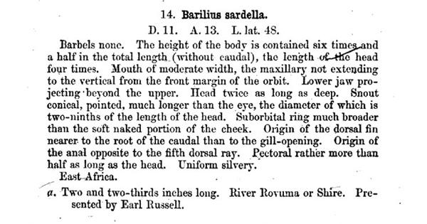 Günther, A.  1868, Description originale de Engraulicypris sardella
