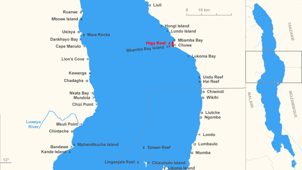 "Distribution de Labidochromis sp. 'perlmutt"""