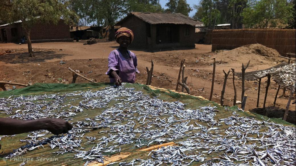 A Nkopola, MAlawi, séchage des usipas